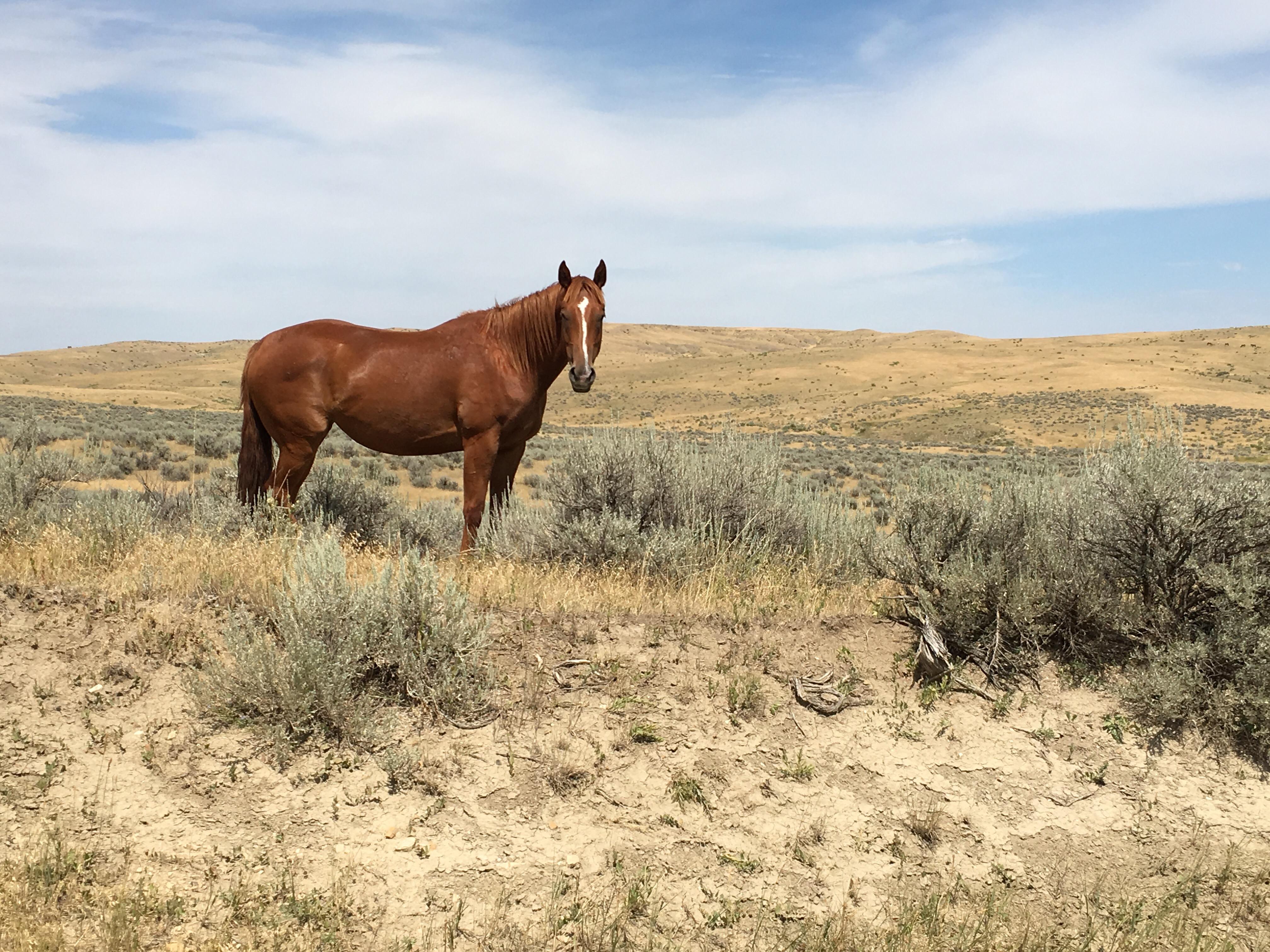 Mustang Ranch Menu Bing Images